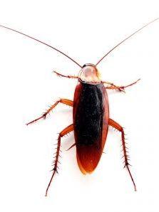 10 insectes à reconnaître