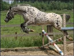 Quelle est ta position lorsque tu sautes un obstacle ?