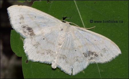 Quizz quelques questions sur les insectes quiz nature - Que mange les papillons de nuit ...