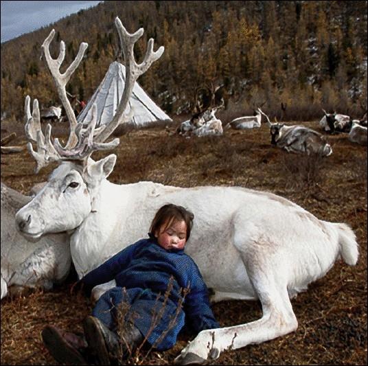 Dans ce pays, pas besoin de somnifères pour plonger dans les bras de Morphée, un bon renne vous suffit ... . .