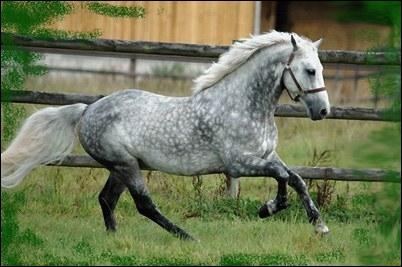 Quelle est la couleur principale de cet animal ?
