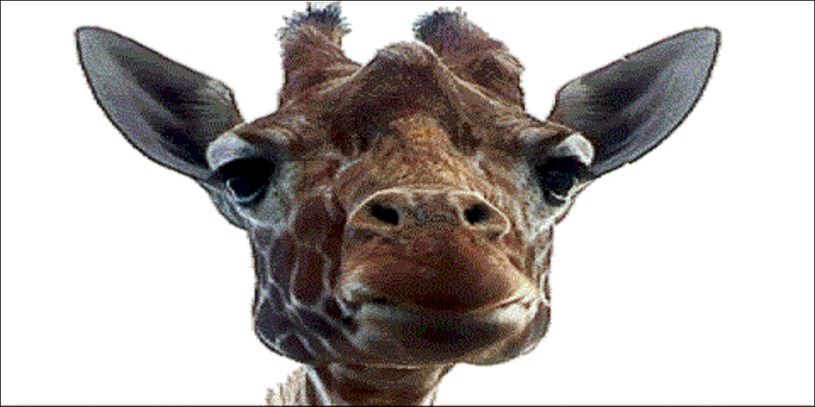 Quel est le mot anglais pour «girafe» ?