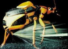 Le coléoptère bombardier est-il capable de projeter des substances chimiques en ébullition sur ses prédateurs (les fourmis entre autres) ?