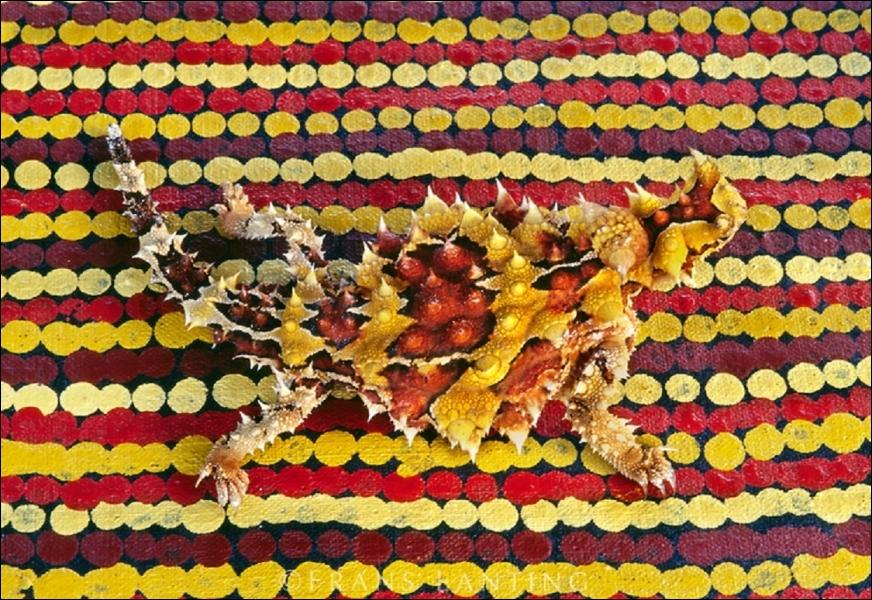 Ce moloch du désert australien mesure environ 17 cm et change de couleur selon ses émotions. Mais est-il capable de gonfler son corps pour impressionner ses adversaires en cas d'attaque ?