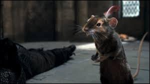 Dans  Le Monde de Narnia : Le Prince Caspian , quelle réflexion fait Ripitchip à Trompillon lorsqu'il le voit entrer pour l'aider lui et ses amis souris à effectuer le plan de Peter pour coincer Miraz ?