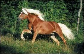 Ce cheval est de race assez commune mais laquelle ?