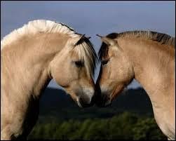 La race de ce cheval est fjord mais quelle est la robe ?