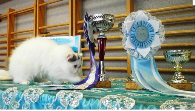 La première exposition féline eut lieu en 1871, avec 178 chats, sous l'impulsion de Harrison Weir à :
