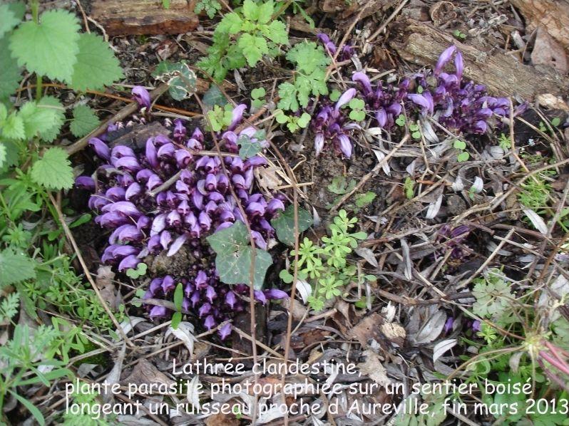 Fleurs sauvages printanières