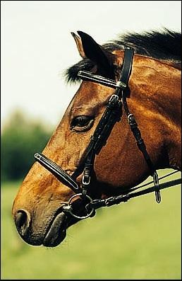 Quelle partie du filet se trouve dans la bouche du cheval ?