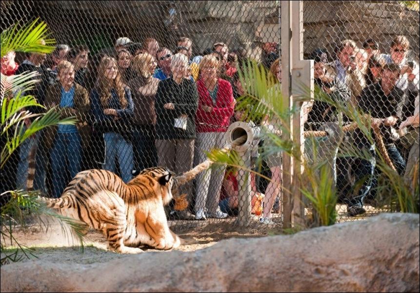 D'accord, le tir à la corde contre un tigre, c'est un jeu un peu ... ... . , mais quel loisir exceptionnel, qui vous laissera un souvenir impérissable !
