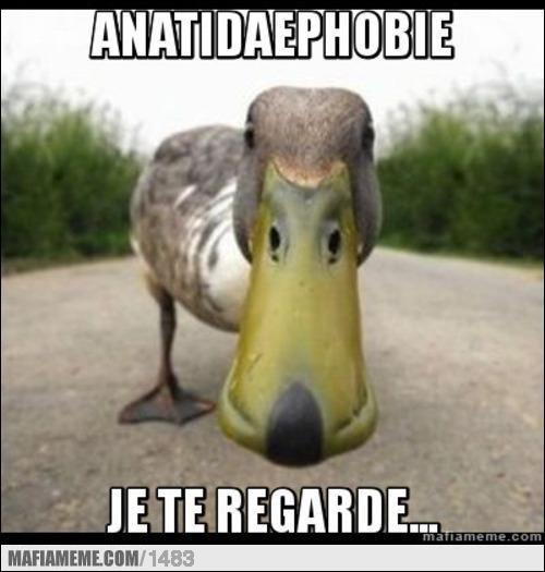 La peur fictionnelle qu'un canard est en train de vous regarder (eh oui, ça existe aussi) :