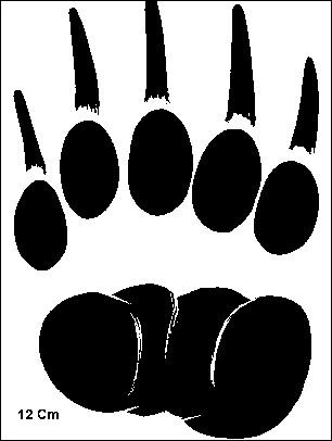 A quel animal sympathique quoiqu'un brin sauvage appartiennent ces empreintes ?