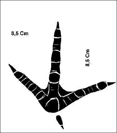 A quel oiseau, apparenté à un truand notoire, appartiennent ces empreintes ?