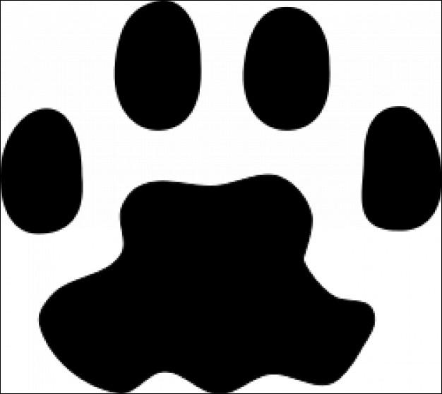 A quel animal domestique souple et indépendant appartiennent ces empreintes ?