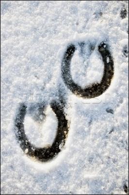 A quel animal rapporteur appartiennent ces empreintes sur la neige ?