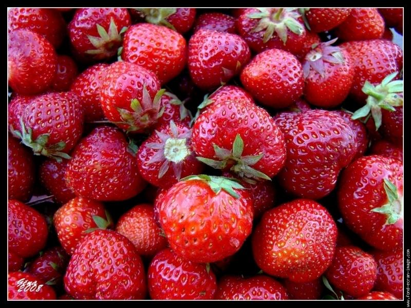 Le fraisier se ramifie à la surface de la terre.