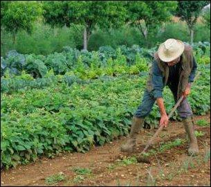 Dans une célèbre comptine pour enfants, il est question de légumes qu'il faut savoir planter  à la mode de chez nous . Lesquels ?