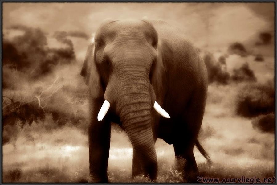 Un long voyage, de Londres jusqu'en Afrique, alors, ne vous  trompez  pas, et vous atteindrez votre  Paradise  !