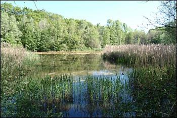 Quelle lettre faut-il mettre devant  ouille  pour écrire le mot qui, en Suisse ou en Savoie, désigne une flaque d'eau, une mare ou un petit étang ?