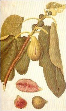 Celle du pape est un fruit. En Guyane elle sert aux orpailleurs et en Belgique c'est un synonyme de  mensonge . Pour écrire son nom, devant  ouille  vous mettrez un :