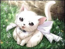 Comment dit-on 'chat' en anglais ?