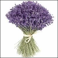 Ceci est un bouquet de :