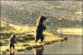 Qui a réalisé  L'Ours  en 1988 ?