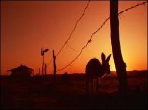 Qui terrorise la population australienne dans le film  Razorback  sorti en 1984 ?