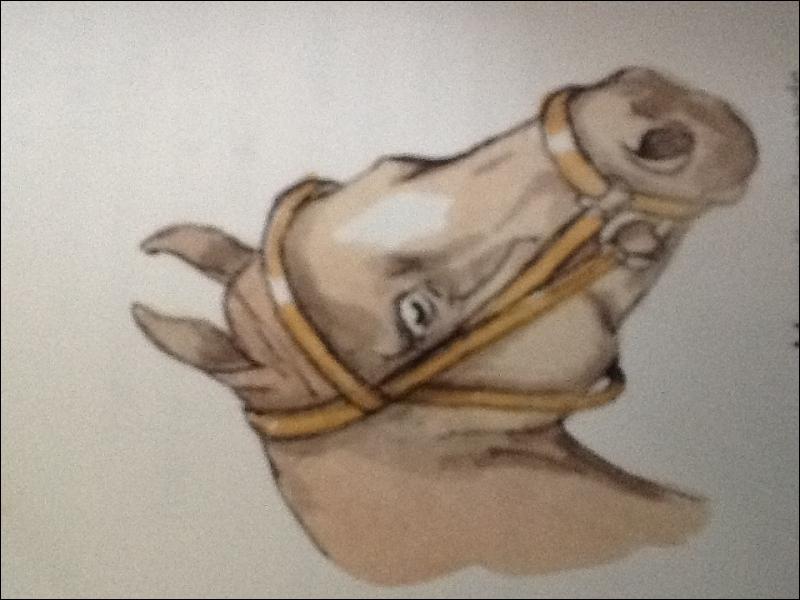 Ce cheval possède une muserolle...