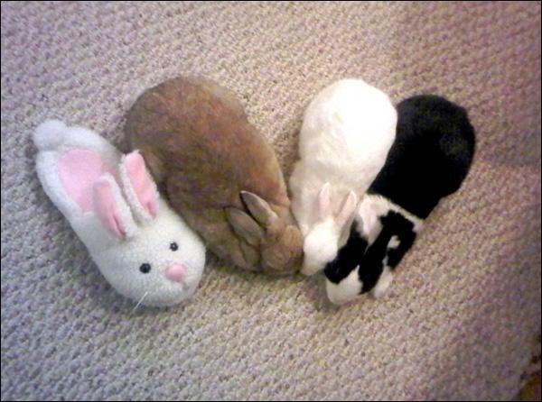 Conseil d'un chasseur (citation de Pierre Doris) : Pour chasser le lapin, mettez-vous derrière un arbre ...