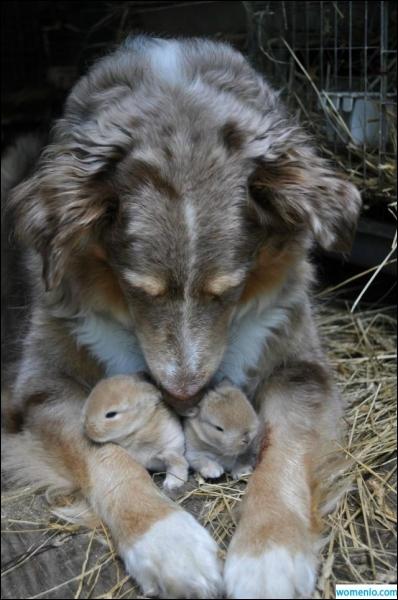 Commun à presque toutes les espèces, même dans l'adoption, il est plus fort que tout !