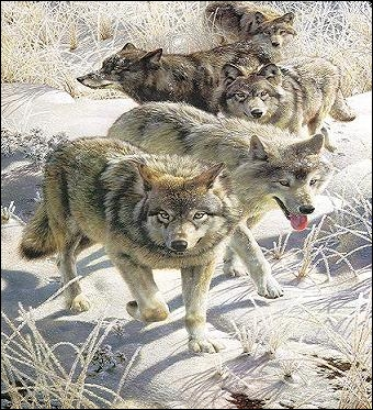 À quel auteur Francis Bacon a-t-il emprunté une phrase devenue célèbre :  Homo homini lupus  ? L'homme est un loup pour l'homme.