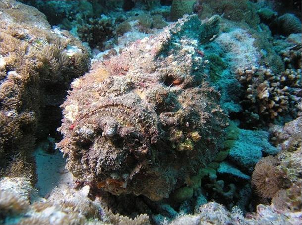 Dans le milieu marin, il existe des endroits où il est préférable de ne pas poser sa main, par exemple sur l'animal de la photo !