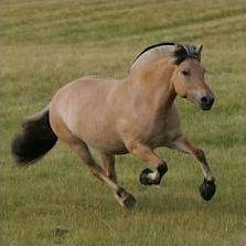 Quiz Chevaux / Équitation