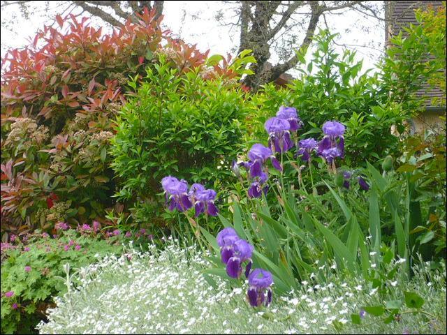 Regardez en haut et à gauche sur le mur. Quel est cet arbuste au feuillage persistant rouge, au printemps se teintant ensuite de rose, devenant enfin vert foncé ?
