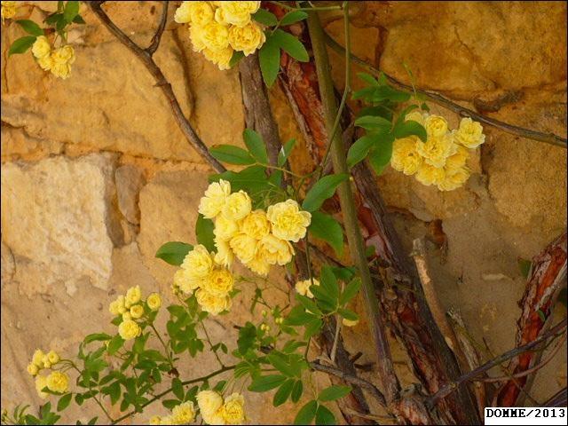 Quelles sont ces fleurs jaunes ?