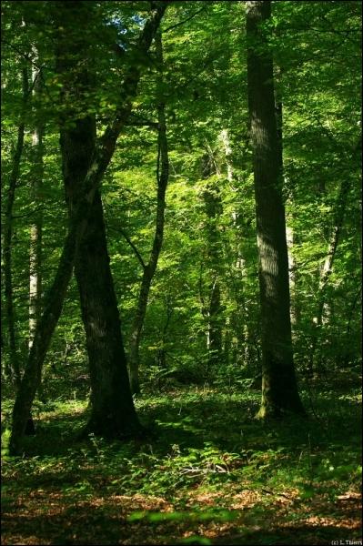 Quel est ce personnage du monde celtique et anglo-saxon habillé en vert ?