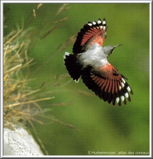 Quel est cet oiseau très coloré ?