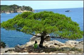 Quel est cet arbre superbe, dont la vue seule évoque les vacances ?