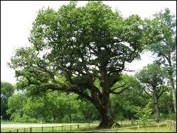 Quel est cet arbre, dont les variétés sont innombrables et très différentes quant à leur emploi : rouvre, merrain ... ?