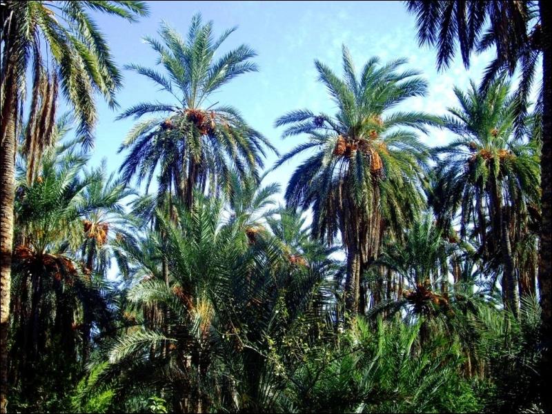 Cet arbre possède de multiples variétés; celui-ci donne des fruits. Quel est son nom ?