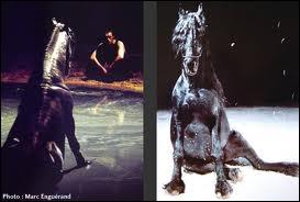 Qui est ce cheval de cirque ?