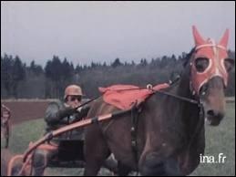 Quel ce cheval de course ?