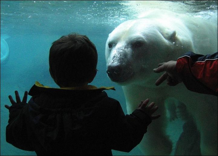 Comme vous le savez assurément tous, l'ours blanc vit au Pôle Sud, au bord de l'océan Antarctique !