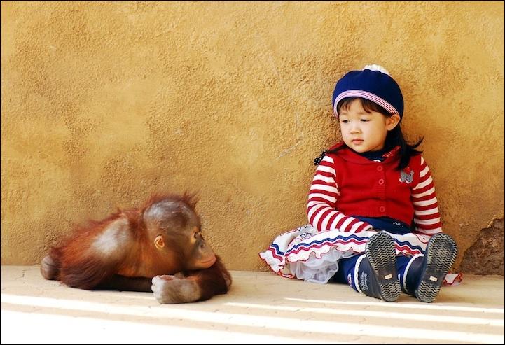 Sur cette photo, on voit un orang-outan !