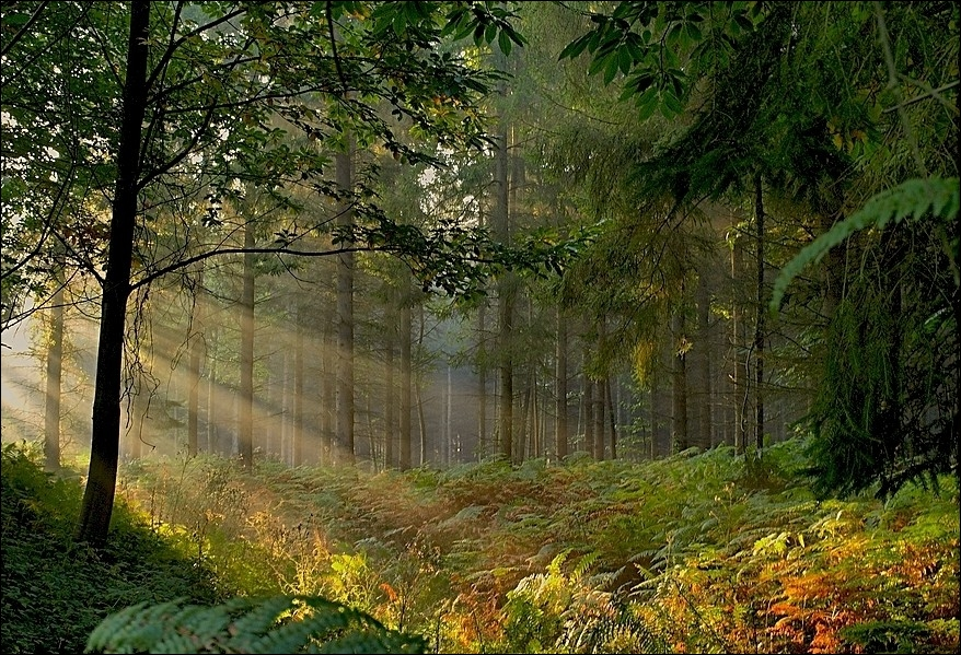 Depuis le milieu du XIXe siècle à quelle forêt bretonne la mythique forêt de Brocéliande est-elle assimilée ?
