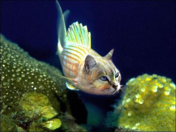 C'est tellement simple que j'hésite à poser la question, de plus cet animal existe vraiment, alors qui est-il ?