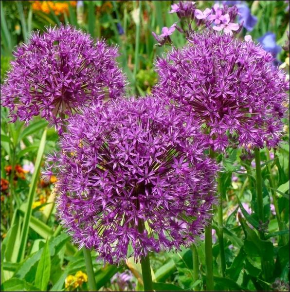 Quizz quelques plantes fleuries faciles quiz plantes - Plante a bulbe liste ...