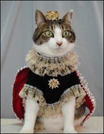 Le royaume des chats ! Symbole de la royauté, cette fleur est comestible :